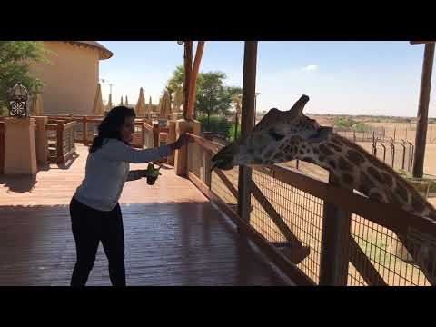 The Most Funniest moment in my Life - Girafee Feeding at Al Ain Zoo