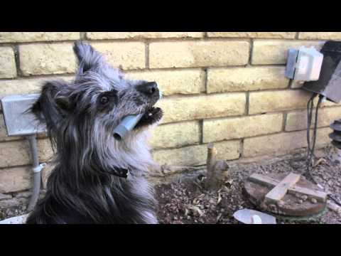 How to Stop a Dog From Chewing Sprinkler Heads : Dog Training Musts