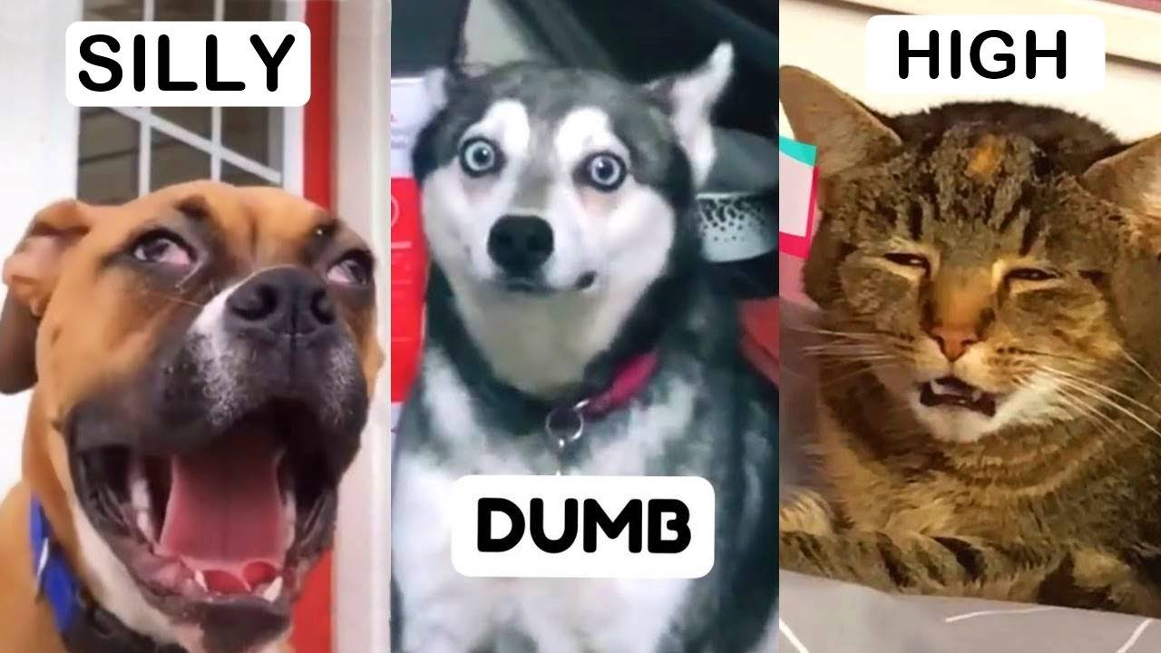Funny Pets on TikTok That Will Brighten Up Your Day   Fluff Planet