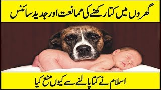 Latest Scientific Research On Dog - Why Are Dogs as Pets Considered Haram Urdu Hindi