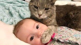 تجميعية مقاطع فيديو اطفال و قطط مضحكة جدا - 😂😼 ستموت من الضحك ( جديد 2019 )
