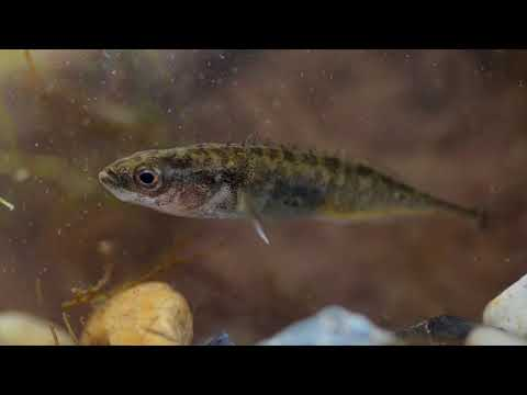 The Wildlife Garden Project   A guide to fish in your wildlife pond