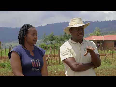Shamba Shape Up Sn 08 - Ep 07 Onions, Layer Chicken, Fodder Crops (English)