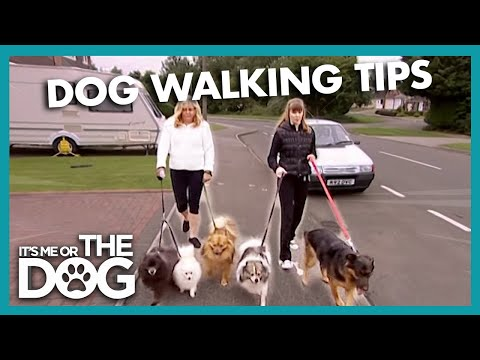 Walking Dogs/Controlling Barking