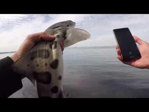 Catching My First Shark!!