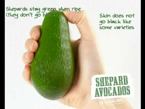 Shepard Avocado Selecting