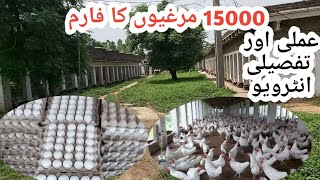 Golden Misri Desi Murghi Farming In Pakistan||Desi Murgi