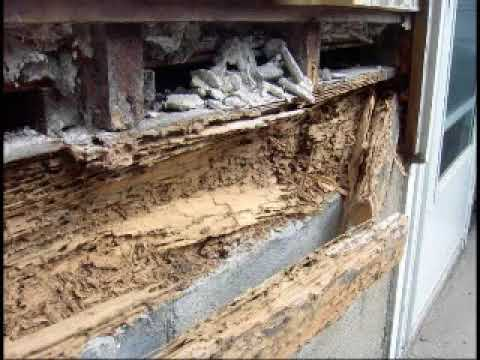 Termite Damage in Homes, how to get rid of termite, how to find termites