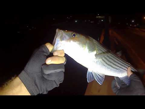 Fishing for Bluefish Resulting in First Striper(schoolie) of Fall 2017 - Long Island NY