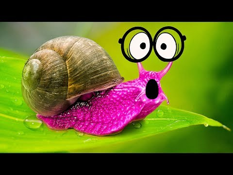WHAT IF YOU DON'T EAT A SNAIL?