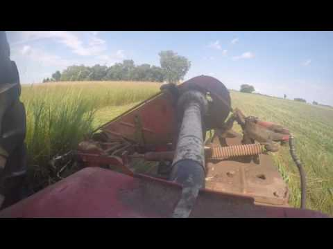 Cutting hay with the H and IH sickle mower!!!!