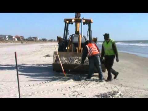 Folly Beach Fish Clean Up
