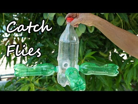 How to make a Homemade Fly Trap with Plastic Bottle
