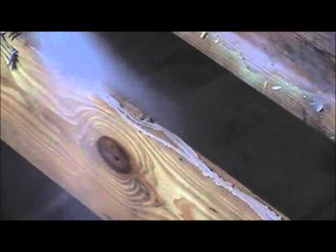Mold contaminated floor joists