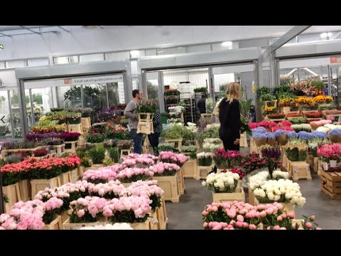 The UK's biggest flower market has a new South London Home