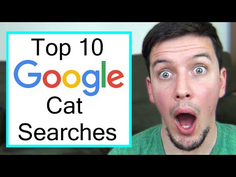 The Top 10 Most Searched Cat Questions on Google
