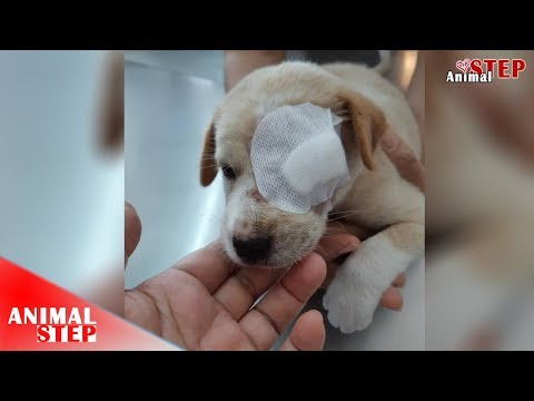 Poor Puppy Is Adopted but One Eye Unable to be saved