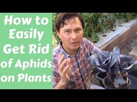 How to Easily Get Rid of Aphids on Plants