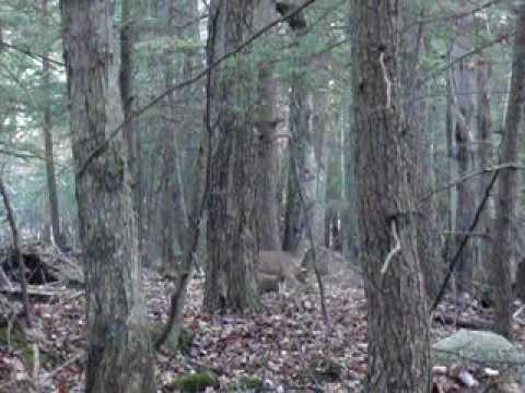 Bobblehead Deer