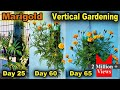 Download How To Grow Marigold Plant in Bottle l Vertical Gardening l How To Use Waste Plastic Bottle MP3,3GP,MP4