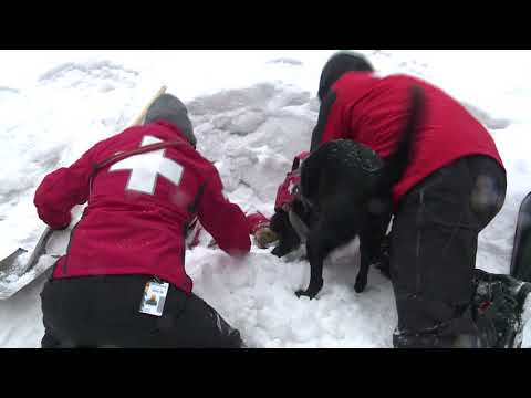 Lee Canyon's Avalanche Rescue Dogs