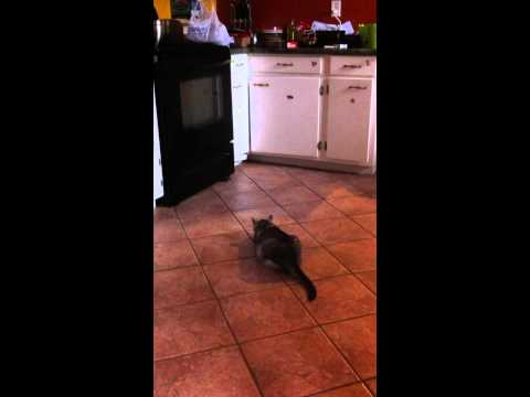 cat catches mouse!!!!!!!!!