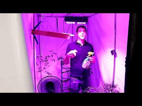 Tour of My Indoor Garden with Grow Room Tips for Beginners