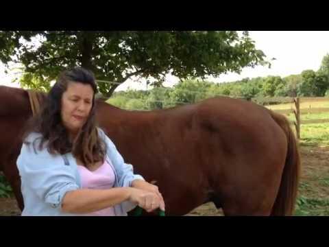 Horse Sacrum  Separation = Lamenes in Horses