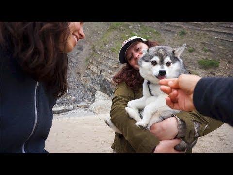 WE SPOTTED A DOG | Short Sand Beach | minimalist travel