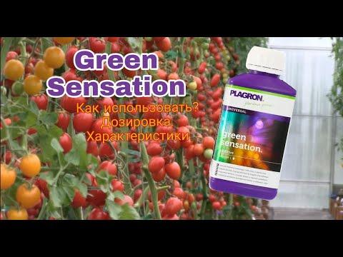 Green Sensation 1 литр - получите ароматный и вкусный плод.