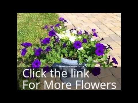 Buying Cheap Flowers Online?