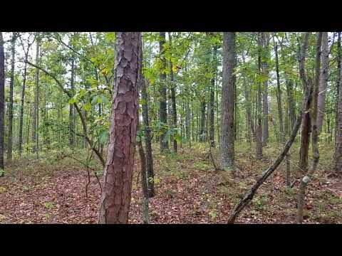 Georgia Land for Sale, 1.46 Acre Gordon County, Owner Financing, Low Money Down