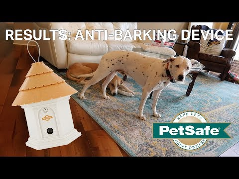 Anti-Dog Barking Device Results | Petsafe Elite Outdoor Bark Control Device