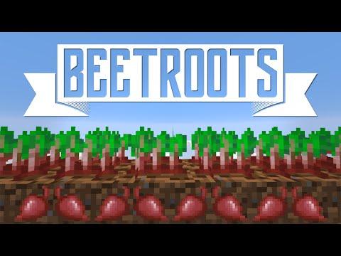 BEETROOT 101 - Minecraft 1.9