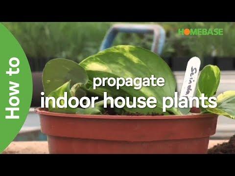 How to propagate indoor house plants | Indoor Garden | Homebase