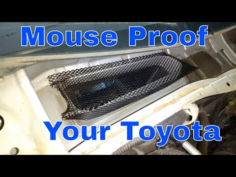 Mouse Nest in Toyota Camry Cabin Filter, Simple, Quick and Easy Solution/Fix