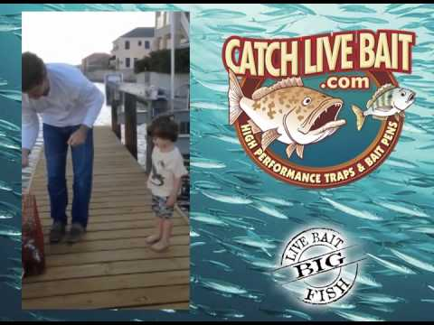 Catch Live Bait Commercial Pinfish Trap