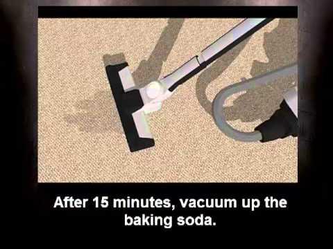 How to Get Urine Smell Out of Carpet - Cat Urine