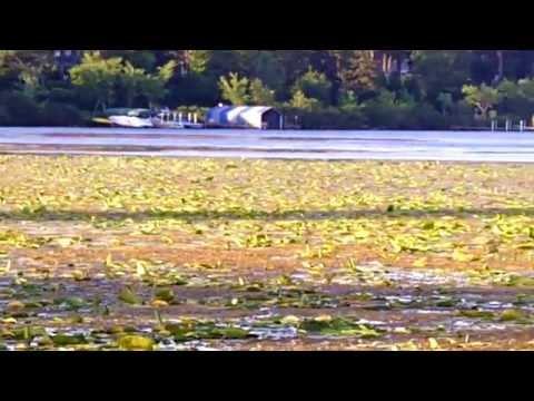Lake Minnetonka Lake Shore and Lake Weed Clean up Harvester