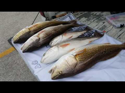 Redfish Braunig Lake San Antonio Texas