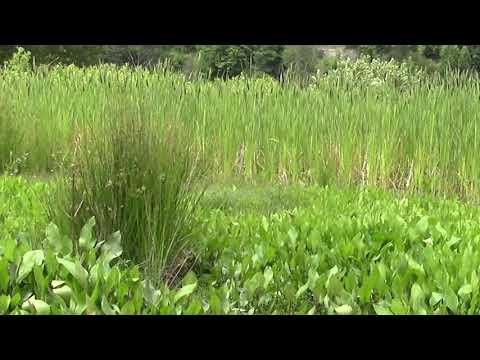 Skykomish Habitat Mitigation Bank