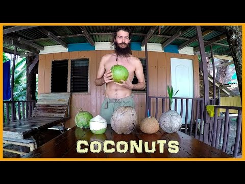 LEARN ABOUT THE STAGES OF THE COCONUT: FROM YOUNG TO MATURE TO SPROUTED