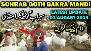 Gulabi Goat Baby Price