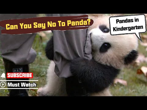 【Panda Top3】Nanny could resist panda's cuteness