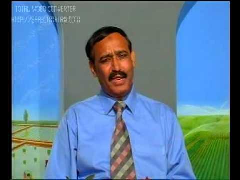 Poultry Birds feather Picking Pakistan Dr.Ashraf Sahibzada