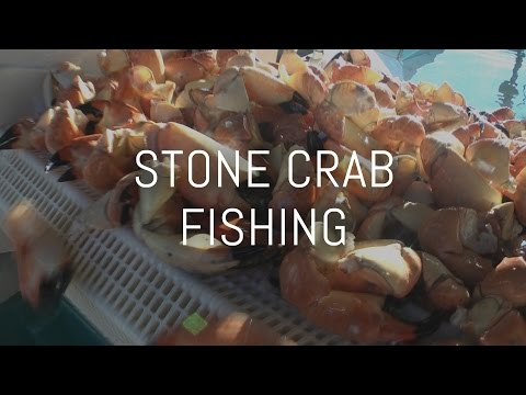 Adventures in Paradise: Stone Crab Fishing