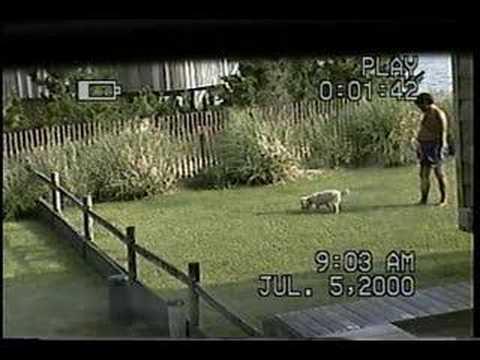 Tossing Dog Crap onto Neighbor's Lawn in Virginia Beach