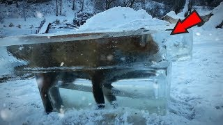 5 Unbelievable Frozen Animals!