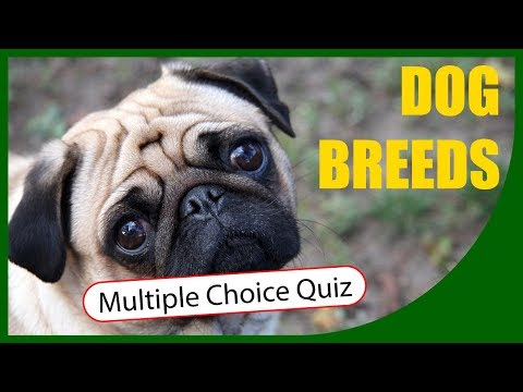 Q★   Types of Dog - Can You Identify the Dog Breed?   MULTIPLE CHOICE TEST   Q-Star Quiz Channel