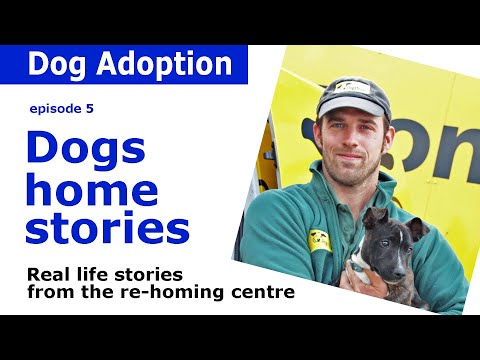 Dogs home stories and adoption advice from Dogs Trust | Episode 5